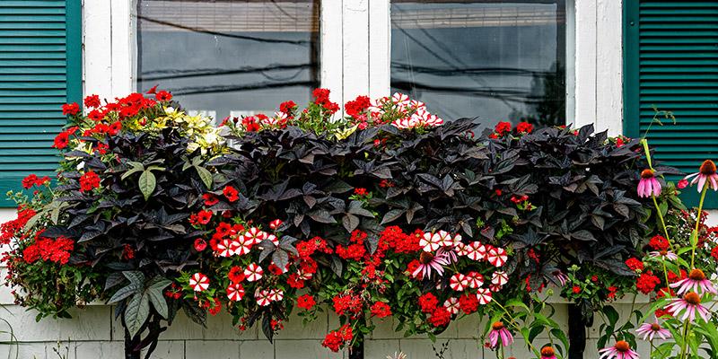 summer window planters